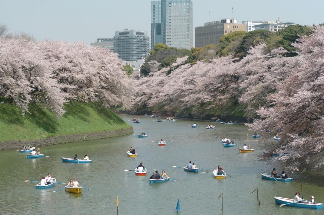 02-01千鳥ケ淵緑道・桜